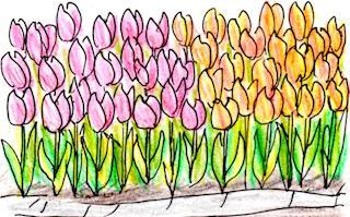 tulip_u.jpg
